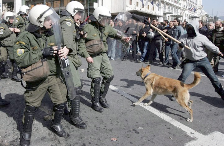 Loukanikos the riot dog of Greece in action