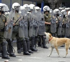 Loukanikos the Greek riot dog protesting a breath away from policemen