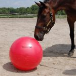 Balls for Horses