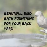 Bird Bath Fountains for Your Backyard