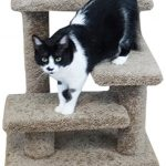 Cat Steps For Older Cats