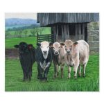 Cow Art: Cows In Art & Paintings
