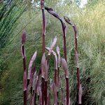 Black Plants for a Gothic Garden