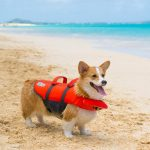 Dog Life Vest With Handles