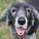 Your Senior Dog: the Joys and Challenges