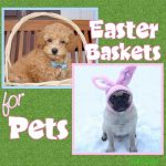 Easter Baskets for Pets