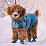 Cold Weather Coats for Dogs