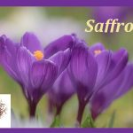 Cooking Basics ~ Spice Spotlight:  Saffron, Cardamon, Curry and Turmeric