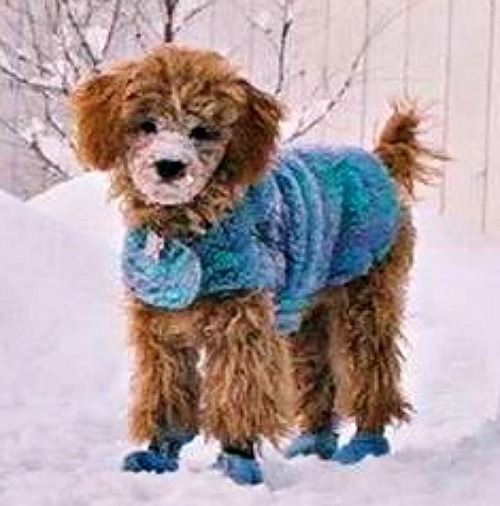 Cold Weather Coats For Dogs - WebNuggetz.com